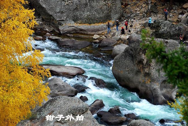 文章主题: 【家乡的美景,让我语言匮乏---可可托海的林木山水人】